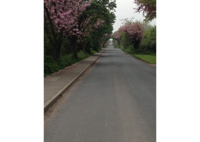 Blossom by the road side