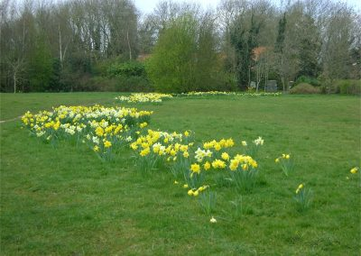 Daffodils on the playground